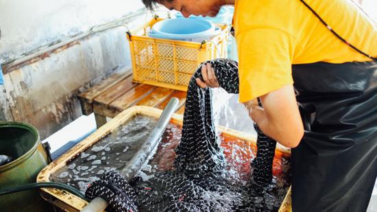 久保かすり織物|水洗